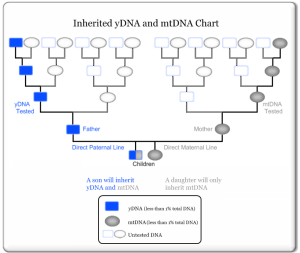DNA Chart - yDNA, mtDNA with autosomal in the middle